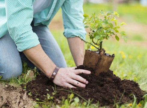 plant-a-tree.jpg